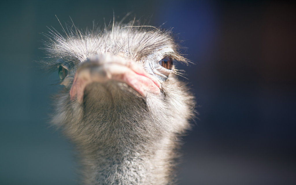страусинный взгляд