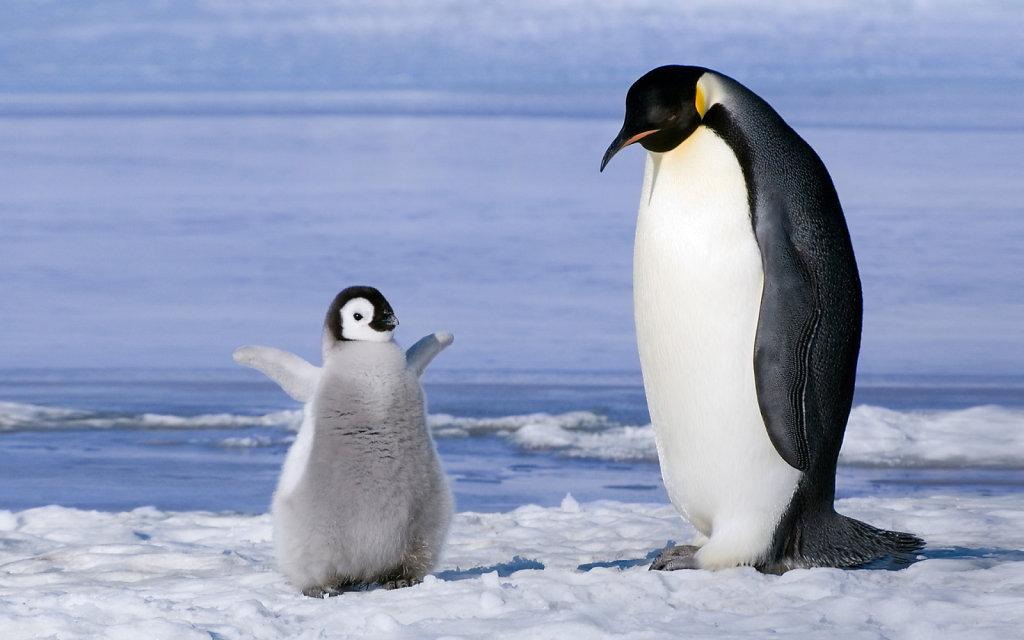 Пингвин и птенец