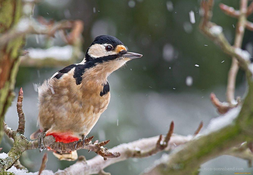 дятел и снег